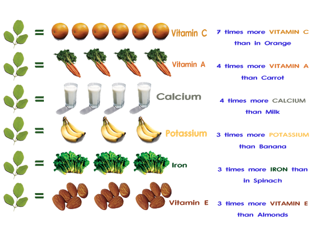 العلاج بالمورينجا  فوائد شجرة المورينجا moringa oleifera Paregrina  moringa tree
