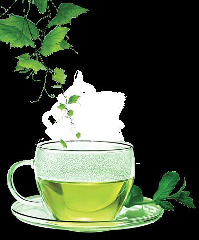 Green Tea Weight Loss Pills - Does it Work?