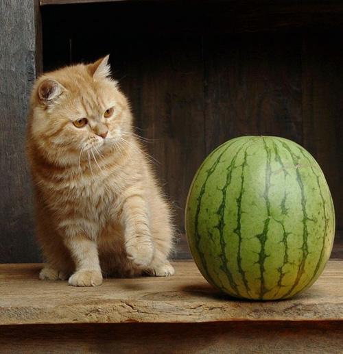 Las fotos de gatos más graciosas y divertidas