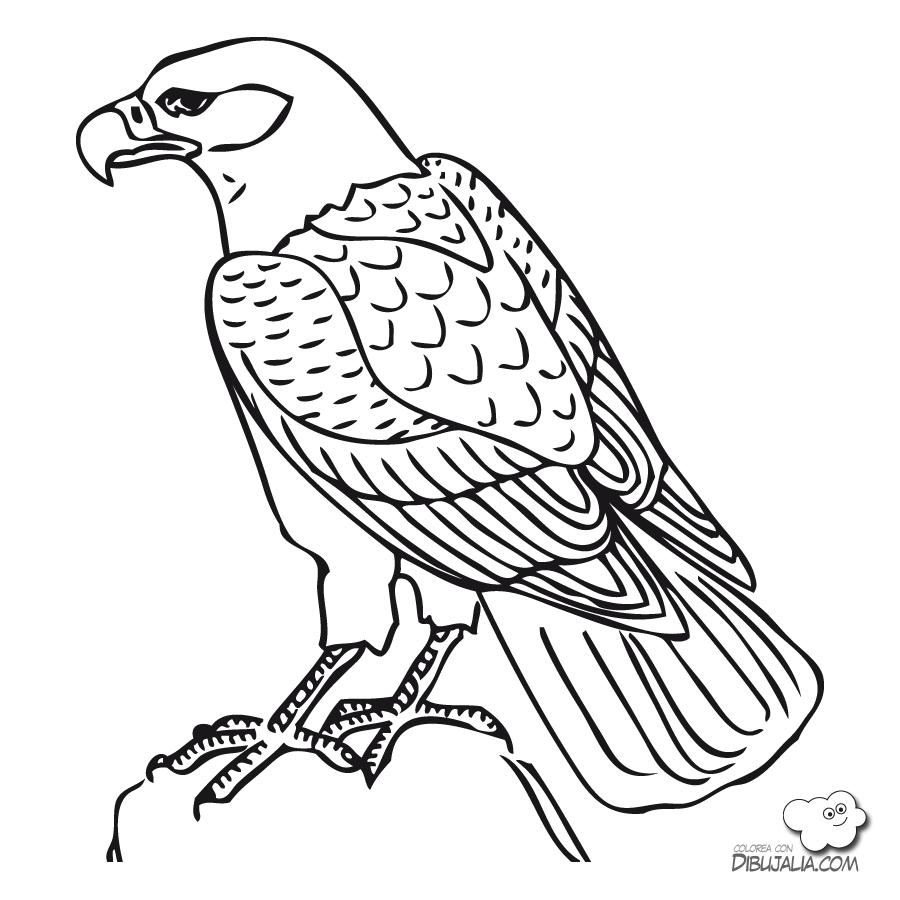 Encantador Peregrino Para Colorear Imprimible Ideas - Dibujos Para ...