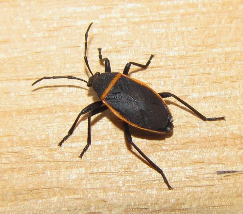 bug eric. Black Bedroom Furniture Sets. Home Design Ideas