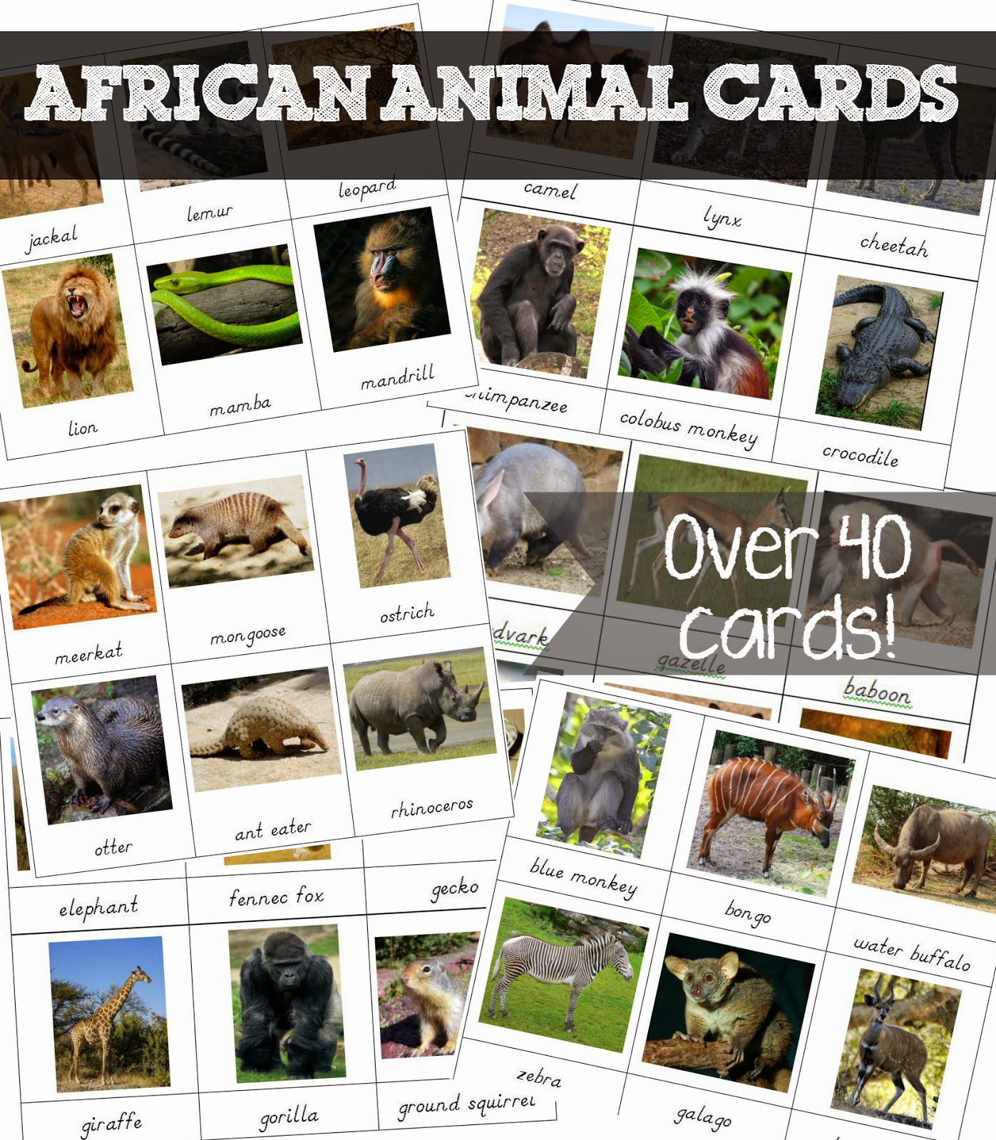 FREE African Animal 3 part cards {Welcome to Mommyhood} #montessori, #freeprintables