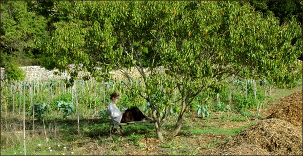 Le jardin for t des etangs pourquoi un jardin for t for Jardin foret