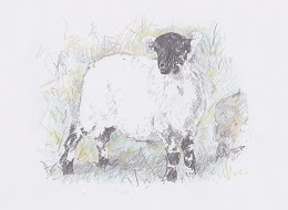 Dartmoor Lamb
