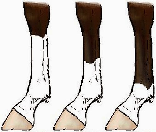 Socks picture 2