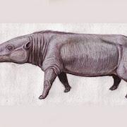 В Африке найден предок бегемотов размером с овцу