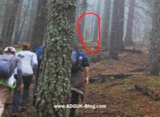 Alien Grey Tertangkap Kamera Pendaki Di Dalam Hutan Majalah Robek