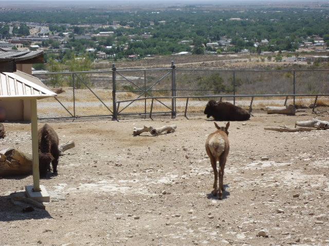 O Jo 39 S Road Trips 2009 2011 Living Desert Zoo Gardens State Park