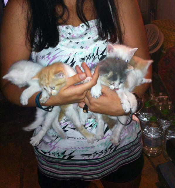 Amigo sin hogar adoptados gatitos de 1 mes - Gatitos de un mes ...