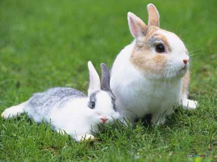 kelinci adalah hewan herbivora.ada banyak jenis diseluruh dunia