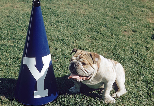 yale university college mascot handsome dan bulldog football grass
