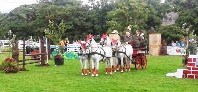 Connemara Driving Ponies