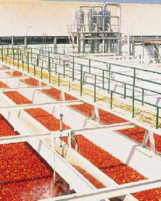 Industria do tomate