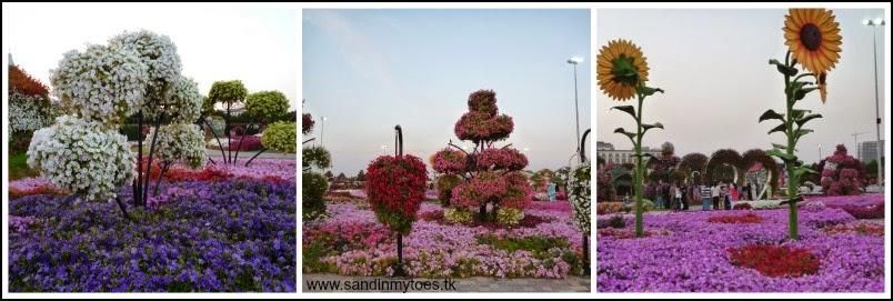 Dubai Miracle Garden landscapes