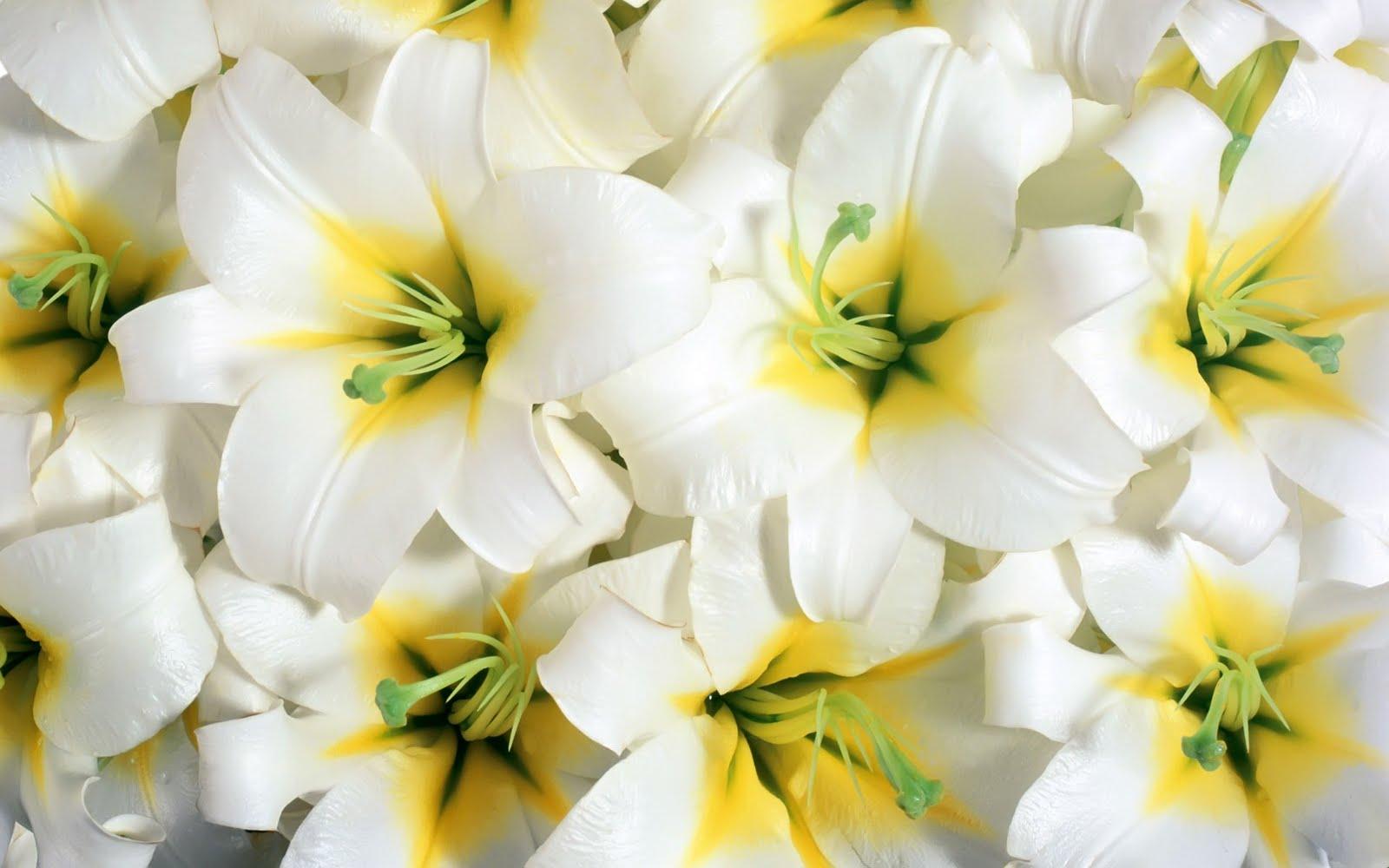 http://1.bp.blogspot.com/-09sWYXuPV7Q/TdlkluS_uZI/AAAAAAAAQKA/QHqSSHVeC9s/s1600/flowers-1920x1200.jpg