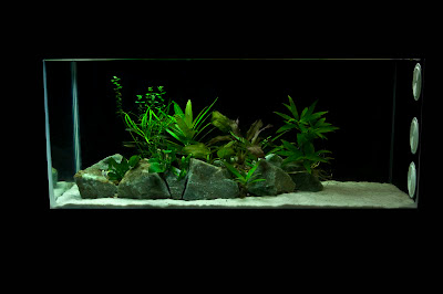 low tech aquarium