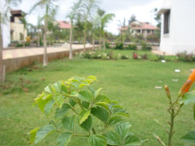 http://1.bp.blogspot.com/-0A3XUhP2ID4/UJ03bDdizvI/AAAAAAAAAV4/W8J_cELqeEs/s640/Project+1+-+Garden+2.jpg