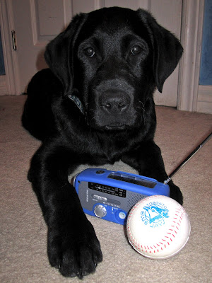 3 month old black lab puppy Romero is lying in front of a white door in a room with cream carpet and blue walls. The picture is taken straight on with his face looking at the camera and his long left arm stretched in front of him towards the camera. Between Romero's front legs are a small blue radio with the antenna extended and a foam baseball with a blue logo of the Toronto Blue Jays printed on it (a profile of a blue jay head in front of a baseball). Romero is wearing his new big collar in celebration of the first baseball game. The collar is patterned with blue and gray squares.