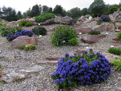 Tromsö Botaniska trädgård