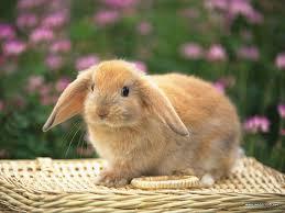 Mrs. Bunnyfluffy