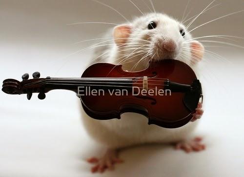 15-The-Violinist-Musical-Dumbo-Rat-Ellen-Van-Deelen-www-designstack-co