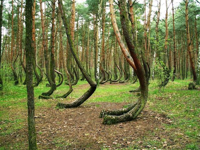 تعرفوا الغابة ملتوية الاشجار