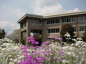 学校の写真