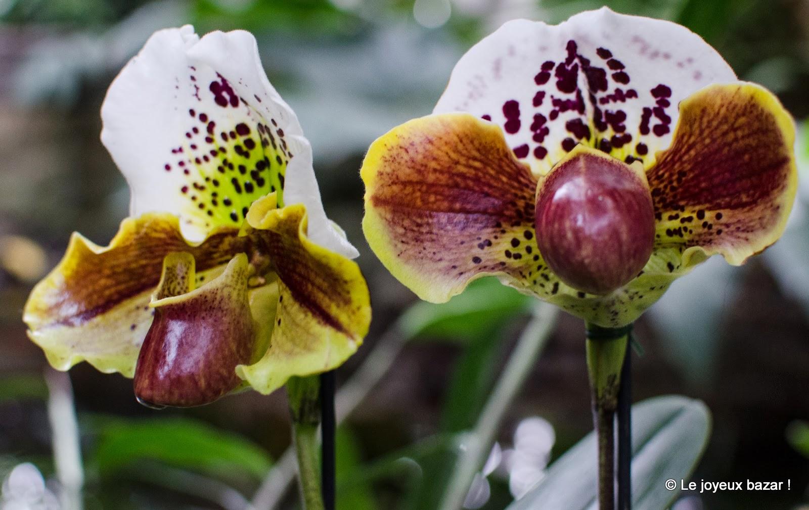 Mille et une orchidées au Jardin des Plantes (Paris)