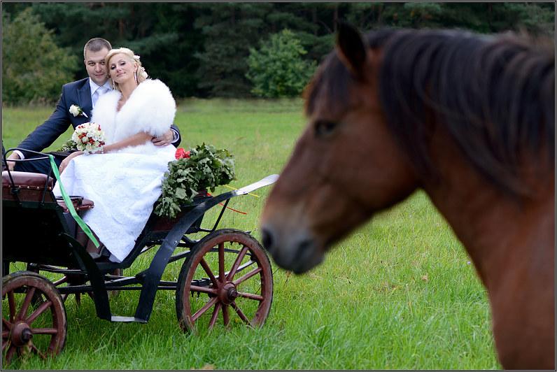 vestuvinės nuotraukos su žirgais