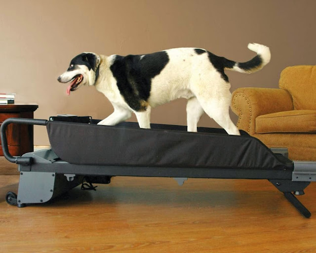 Useful Dog Products and Gadgets (15) 11