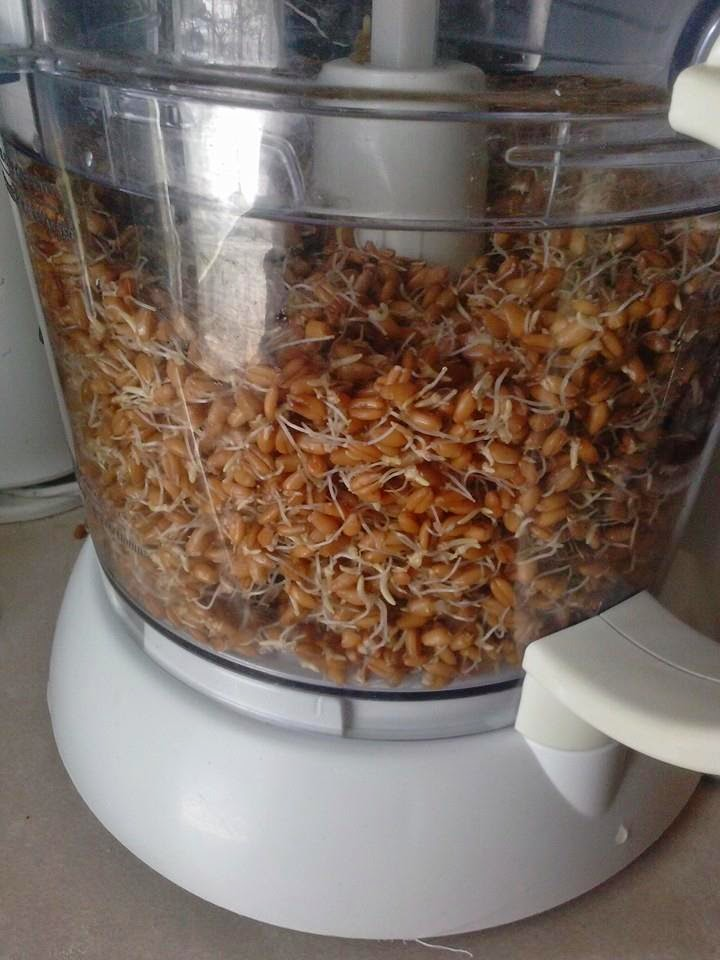 Sprouted Wheat Berries