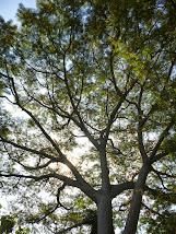 Associe-se ao Árvore da Vida, clique na imagem e acesse a ficha de adesão