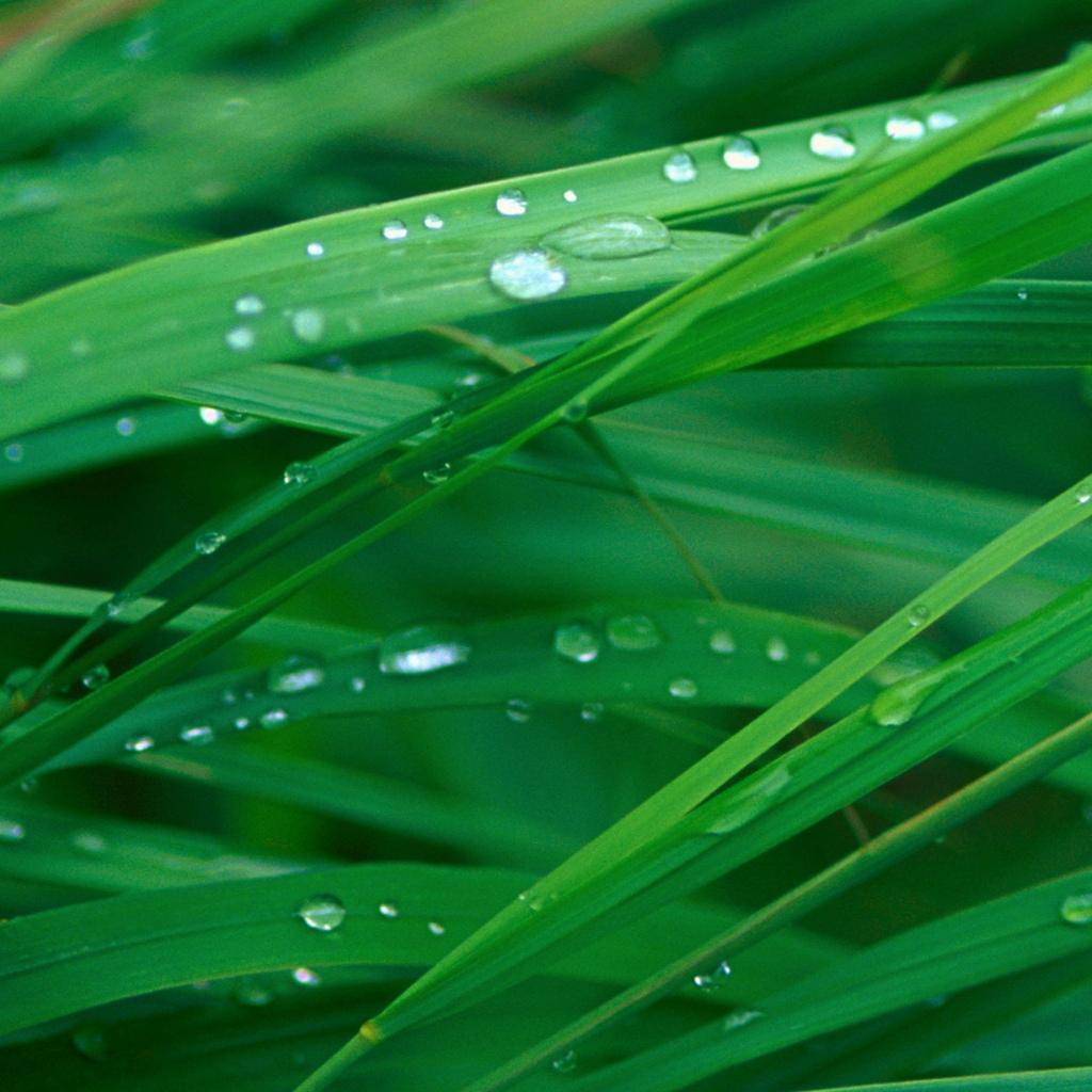 Wallpap: Grass Blades IPad Tablet Wallpaper
