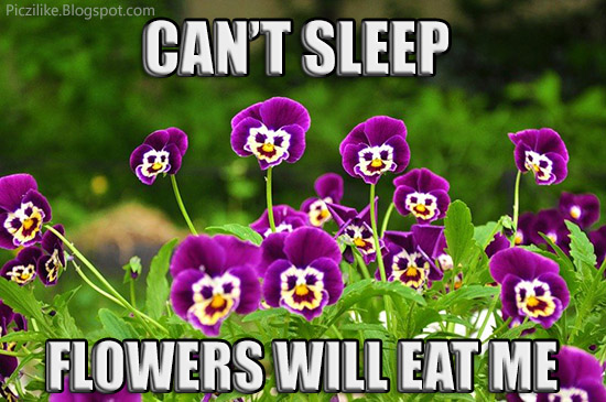 Funny Can T Sleep Meme : Picz i like march