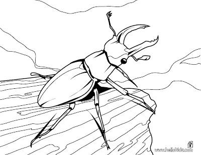 Έντομα και Αραχνοειδή στο Νηπιαγωγείο