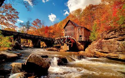 Otoño en el bosque junto al río - Forest Autumn