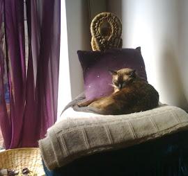 Os gatos do Cantinho