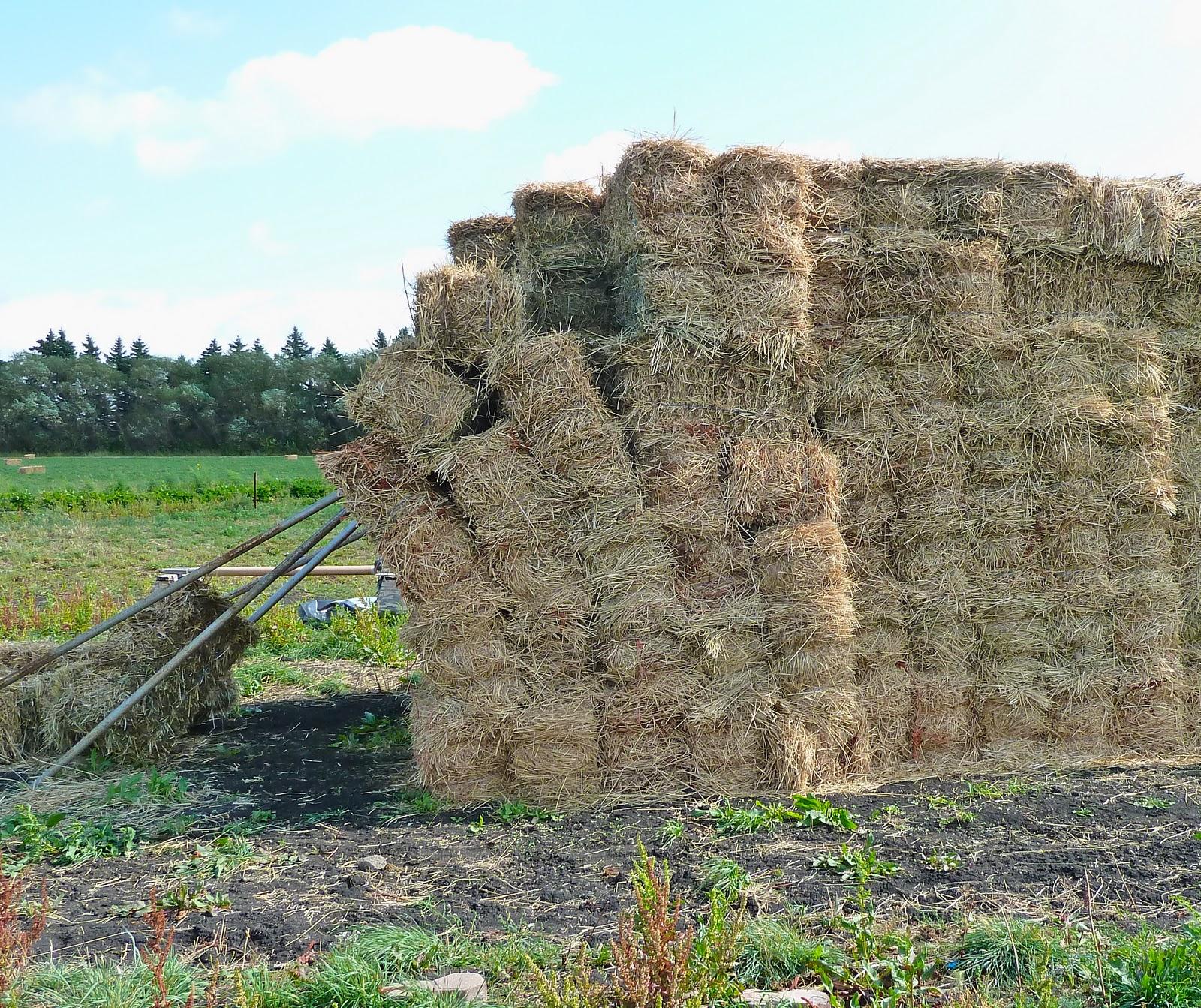 how to grow alfalfa hay