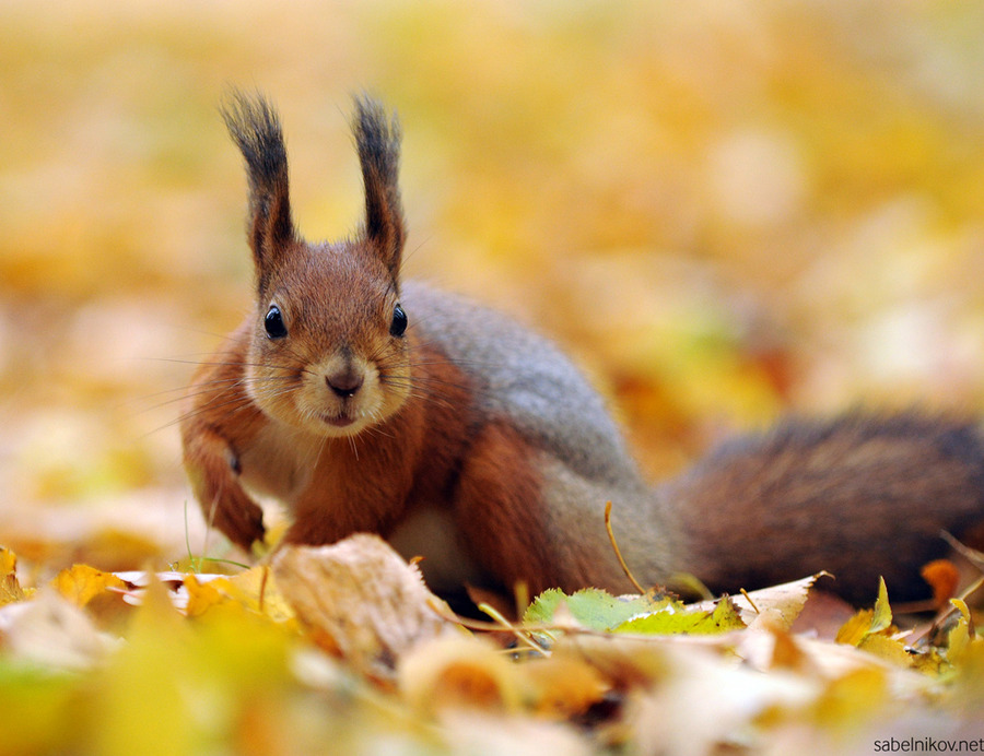 Autumn Animal Images  ...