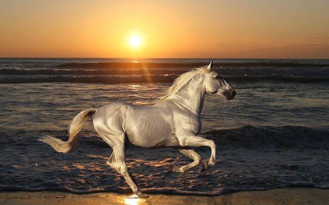 Beautiful White Horse On The Beach