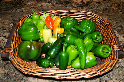 2013 First Pepper Harvest at Alejandro Farm