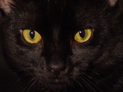 Yellow Eyes Black Cat Wallpaper