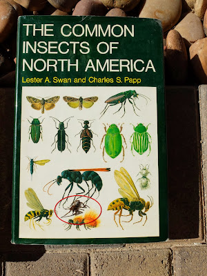 Kukulcania arizonica on an insect book – wrong book for spiders.