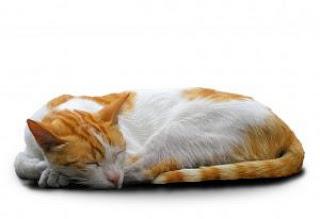 sonhar com gatos filhotes