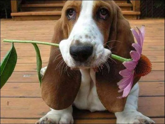 flower and dog