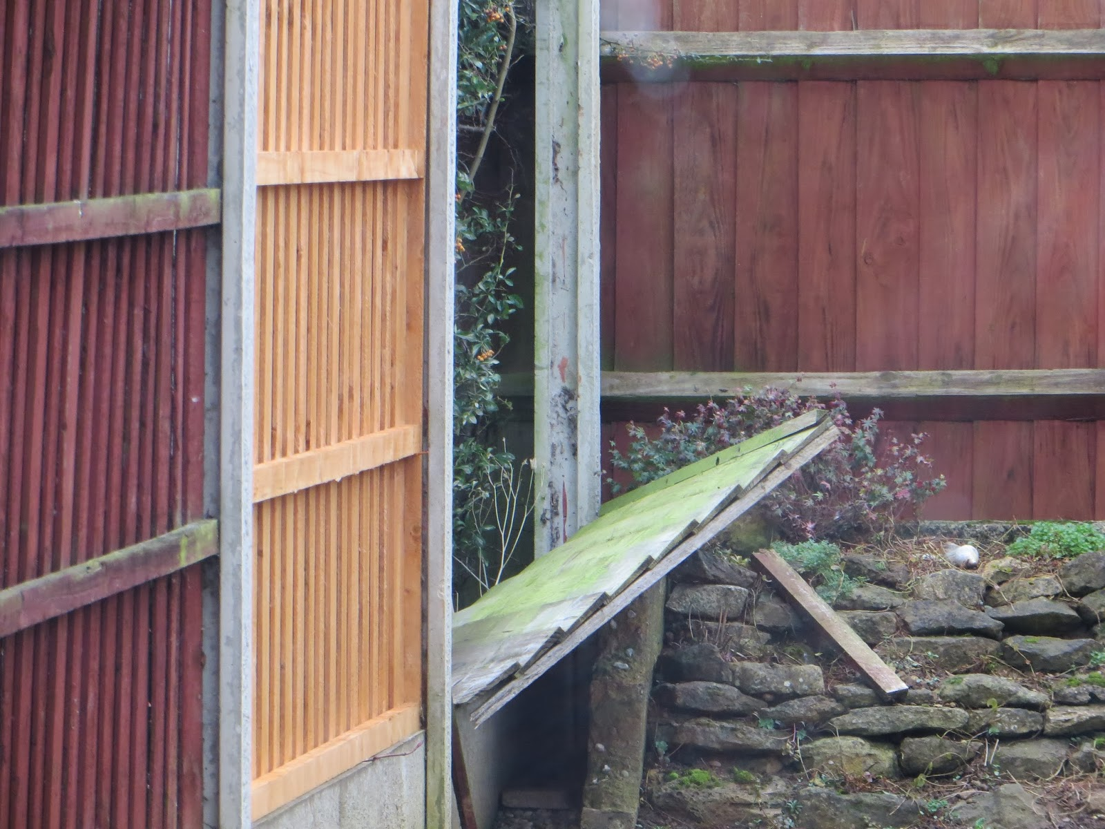 Fence panels destroyed in fierce gale force winds.