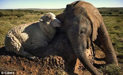 10 Hewan Dengan Persahabatan Paling Unik Di Dunia
