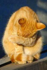 Galería Tabby en honor a mi Gatín, digno representante de estos gatos.