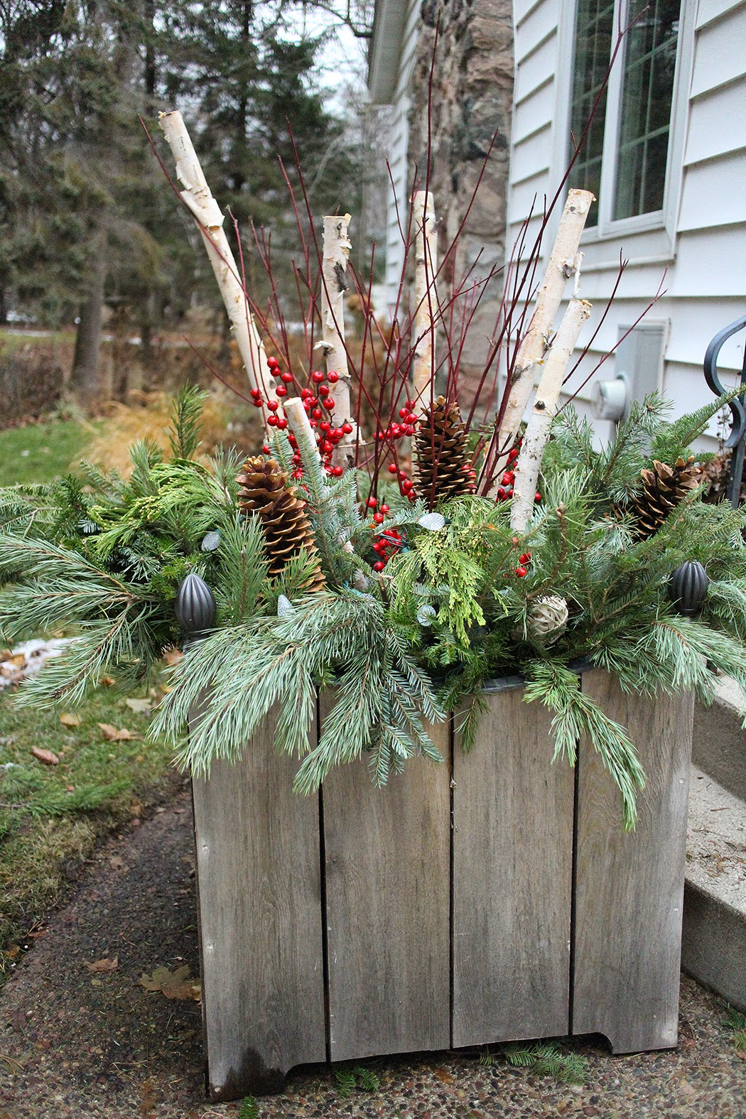 Holiday container with birch, dogwood, greens, pine cones-- The Impatient Gardener