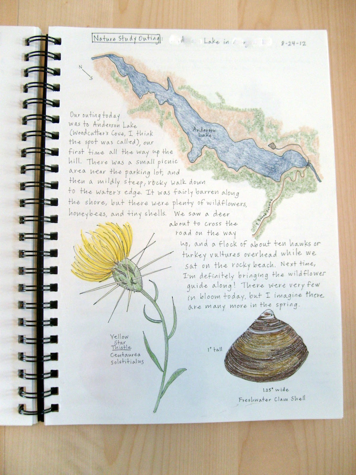 Joyous Lessons A Peek At Mommys Nature Journal